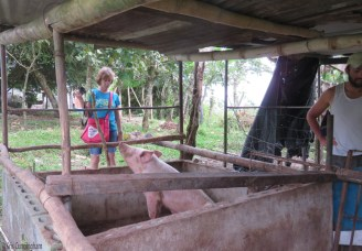 Lets go visit the pigs!