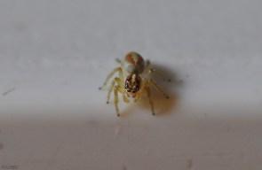 Pretty little spider.