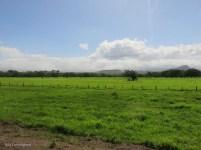 more green fields