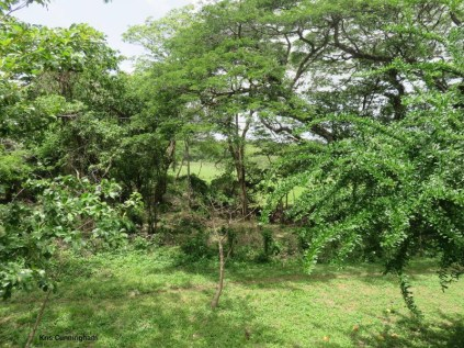 My first look at the Nicaragua countryside is beautiful.