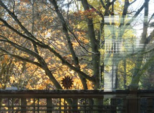 the sun comes up, the frost melts and the fog clears, and the leaves look pretty through the back window