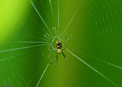 another colorful spider