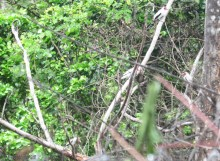 There were actually two pairs of these birds. This isn't a great photo but you can see four birds.
