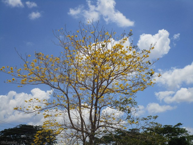 our pretty yellow tree