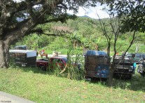 Many trucks and horse trailers were parked all over town