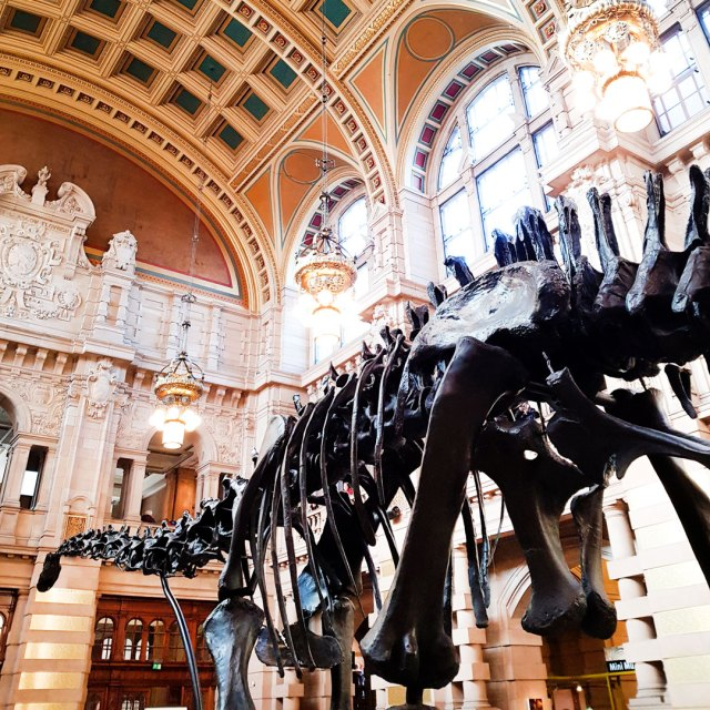 dippy on tour at the kelvingrove art gallery and museum