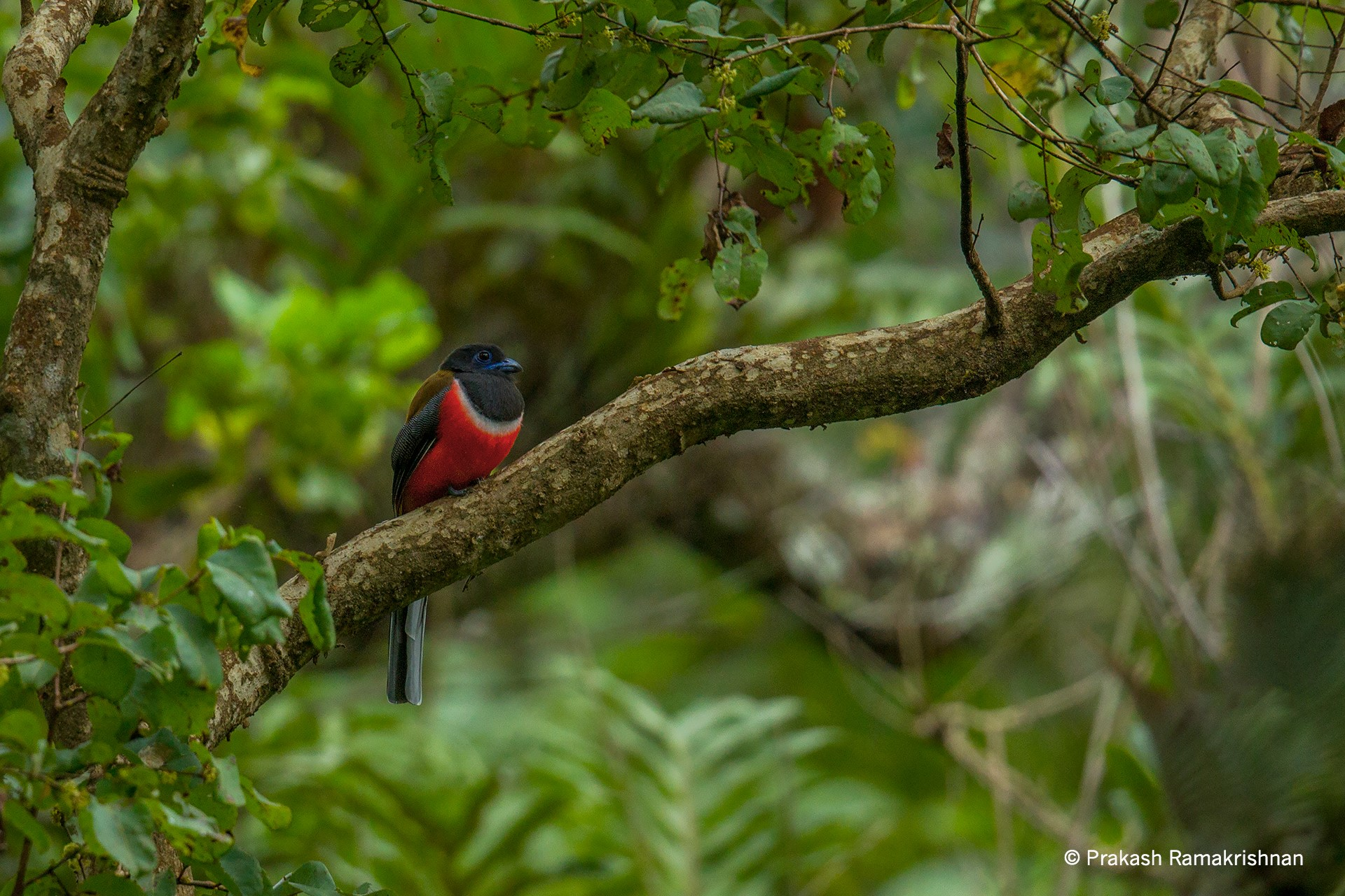 Thadam Nature and Wildlife Photography Tour at TopSlip  The Pollachi Papyrus  Pollachi Travel