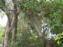 NC Spanish Moss by Renae Rude