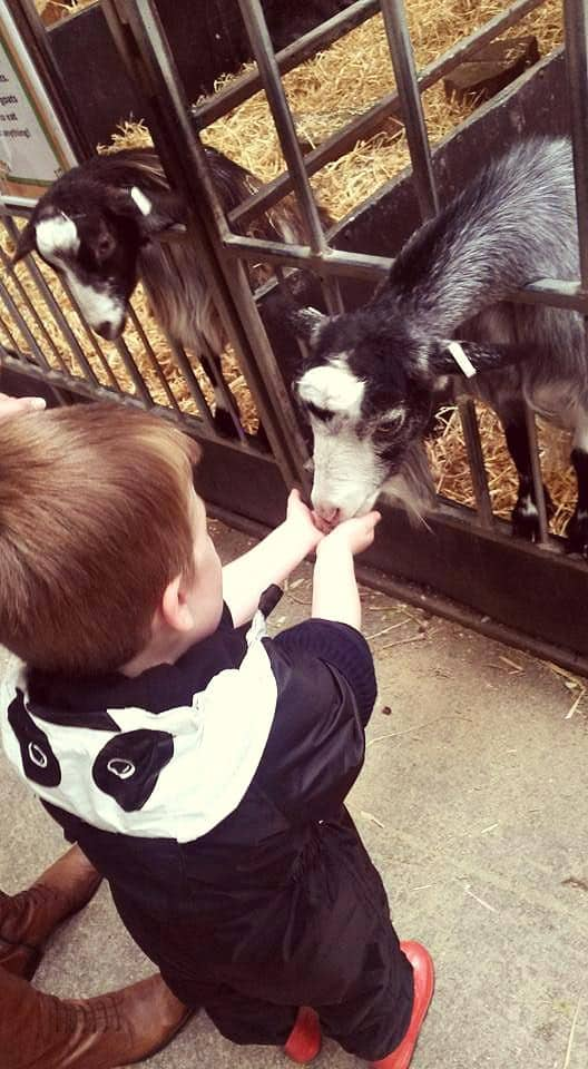 Little boy feeding a black and white goat