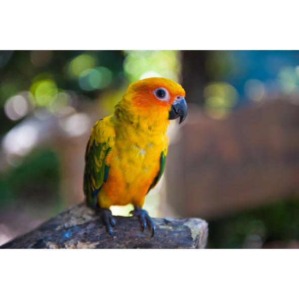 Blue Quaker Parrot Sale