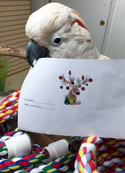 "A Moluccan Cockatoo standing on some rope perches, holding a sheet of paper showing a cartoon reindeer with Christmas bulbs hanging from his antlers, with the caption, ""From Parrot Posse"""