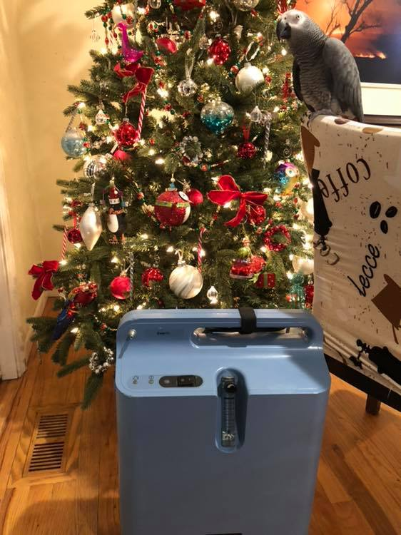 An oxygen concentrator on the floor in front of a decorated Christmas tree. To the right of the concentrator is an African Grey parrot sitting on the back of an upholstered high-back chair