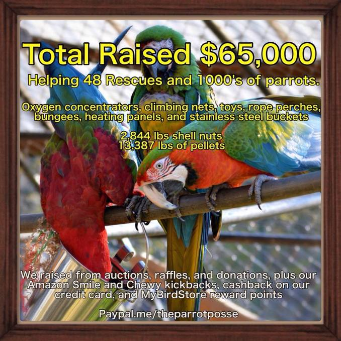 "3 Macaws on a perch in an outdoor flight with the caption, ""Total Raised $65,000 Helping 48 Rescues and 1000's of parrots"" over the photo"