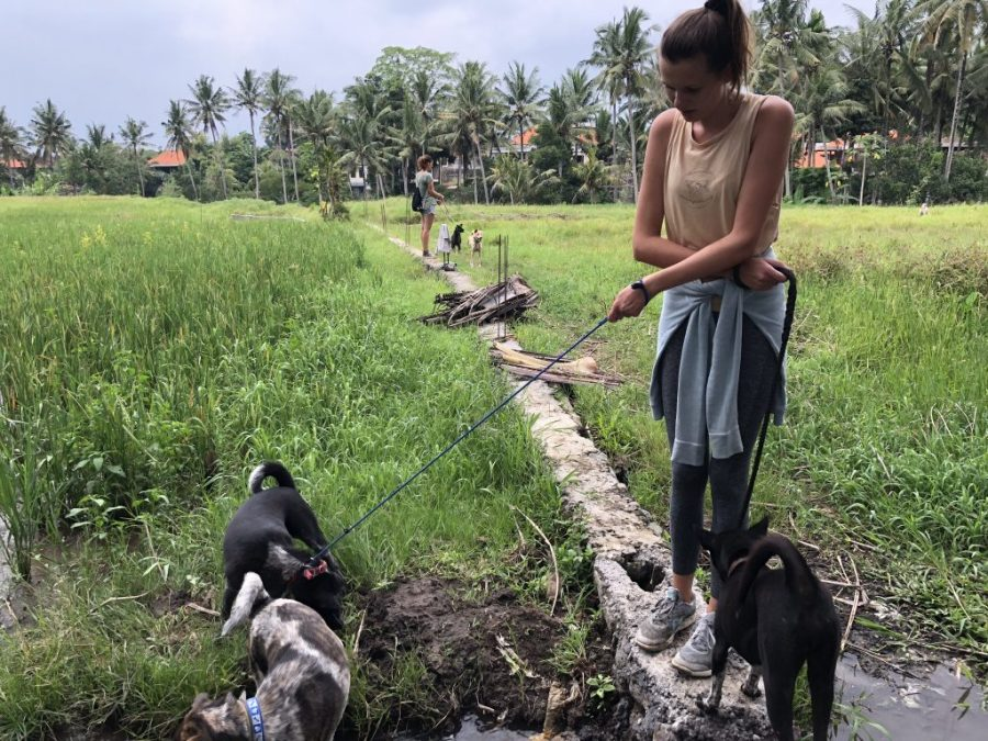 bali stray dogs