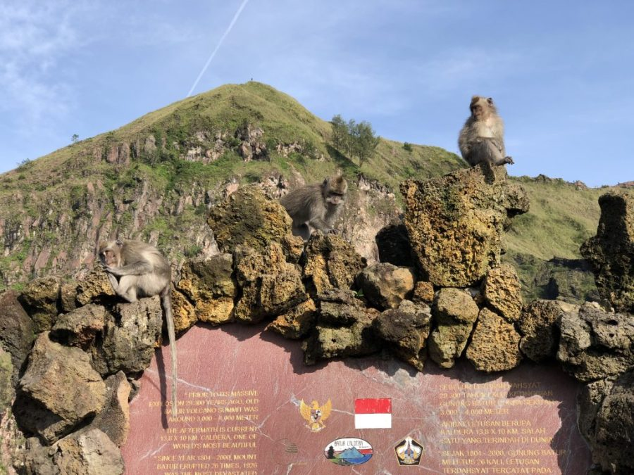 mount batur trek monkeys