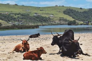 xhosa village coffee bay