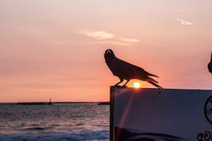 colombo sri lanka sunset