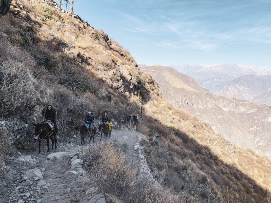 colca canyon arequipa peru horse