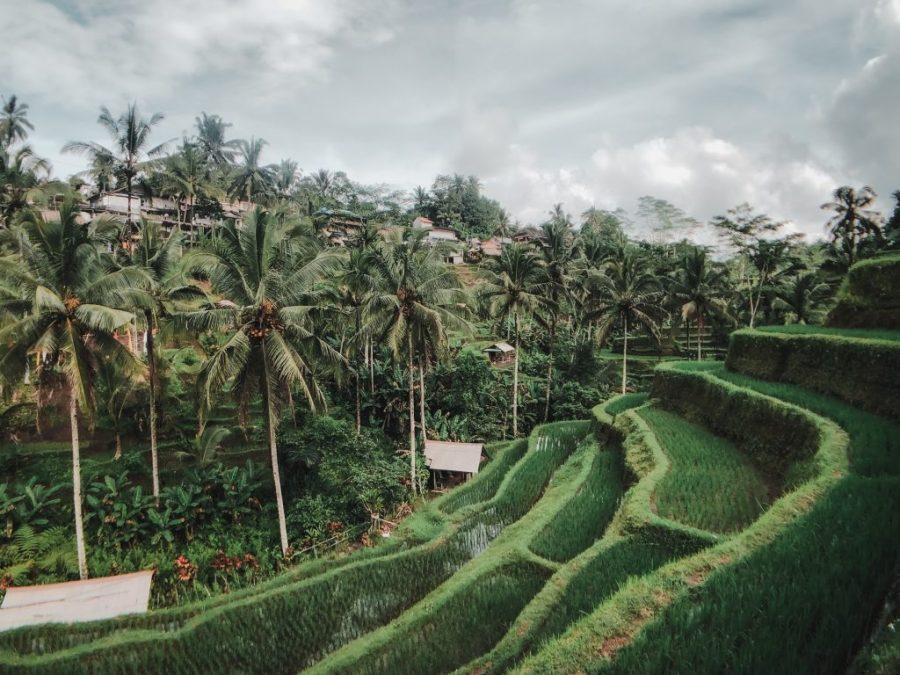 bali rice terraces tegallalang ubud