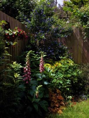 garden June 24th 2012 004