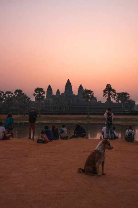 stray do at sunrise overlooking angkor wat with small crowd of people