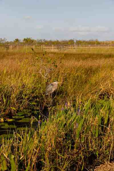 best national parks in florida for hiking