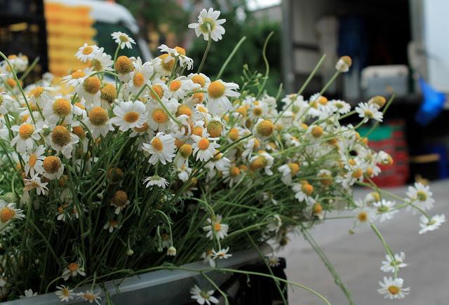 summer-flowers-union-square-park-patranila-project