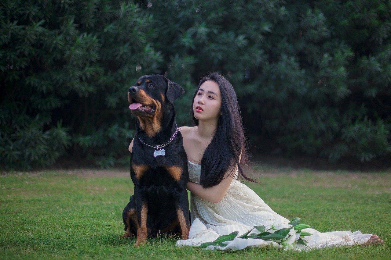 rottweiler, dog, wedding dresses