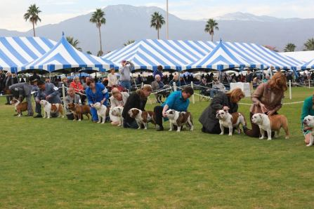 2016 Kennel Club of Palm Springs PCBC Supported Entry Sunday