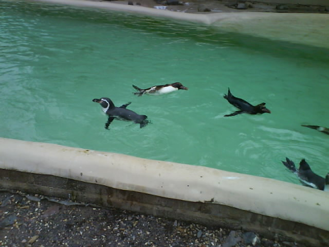 More Penguins