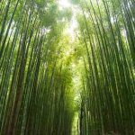 Les Brown Motivational Video Chinese Bamboo Tree The Personal Development Cafe