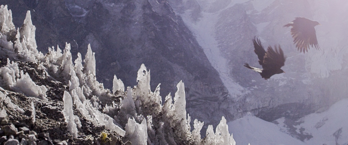 Sherpa_93_Birds-in-Khumbu-icefall