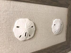 DIY Sand Dollar Art