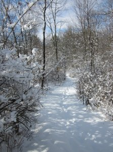 snow at the nature preserve