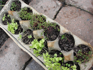 Use an Egg carton as DIY Seed Pods to start your plants