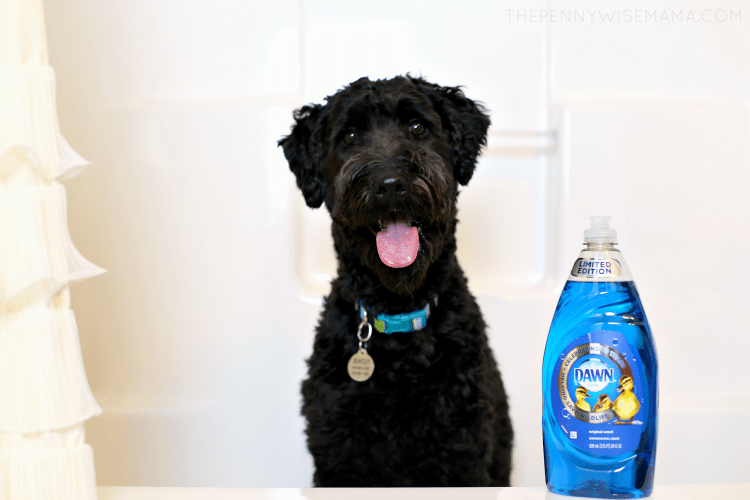 Washing your dog with Dawn Dish Soap