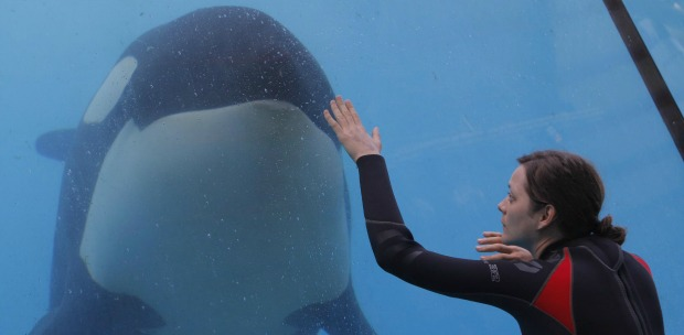 Rust And Bone DVD Review