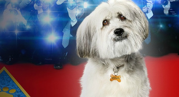 pudsey-the-dog-movie