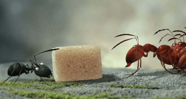 Bugs On Film