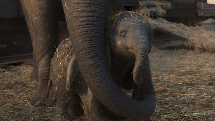 Film Review – Dumbo (2019)