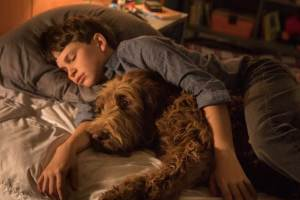 Film Review – Think Like A Dog (2020)