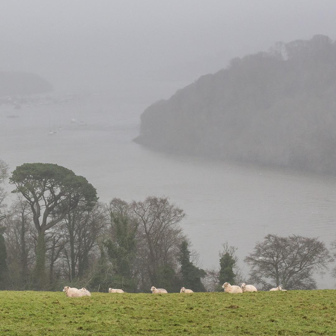 River Dart in the rain, from Greenway, Devon.