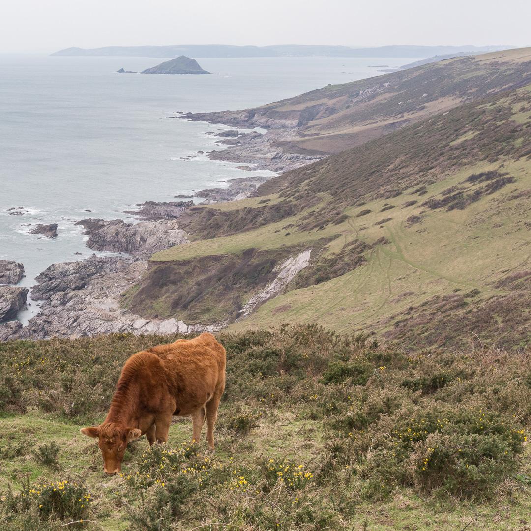 Gara Point & Great Mew Stone, Devon. Reme Head in Cornwall beyond.