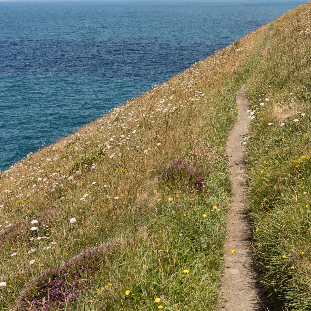 Coast path above Beeny Cliff, Cornwall.