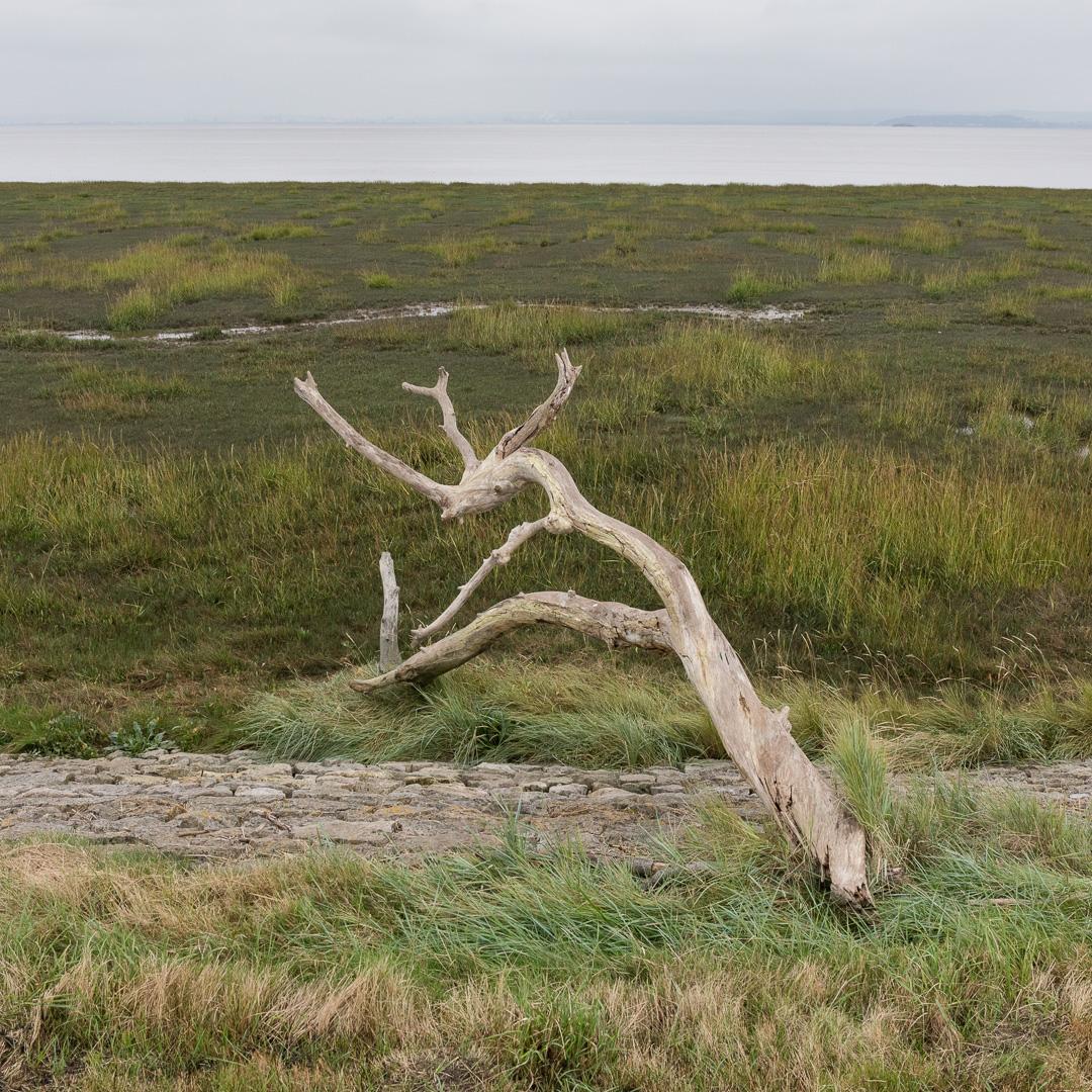 Roggiett Moor, Gwent.