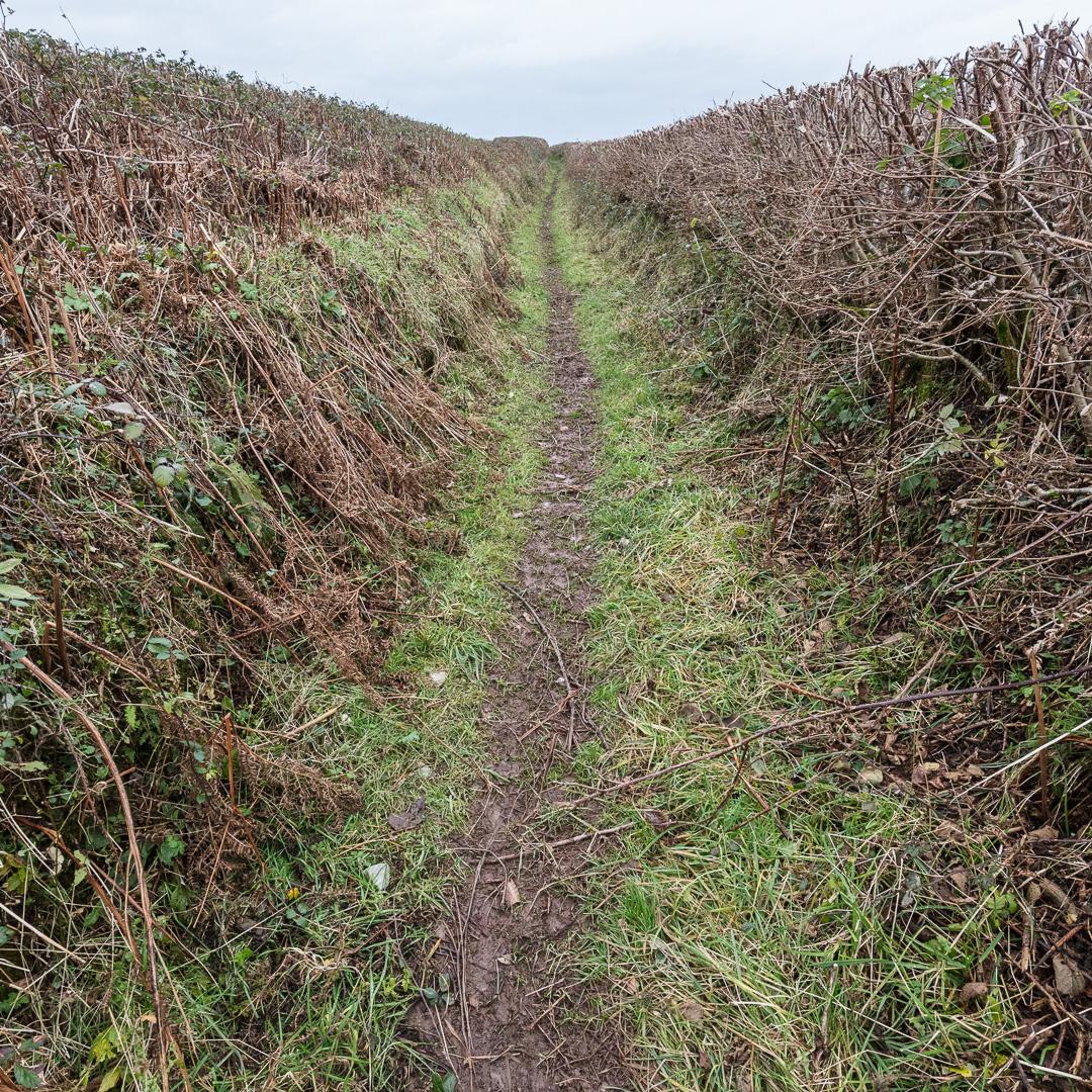Path to Llansteffan, Gwent.