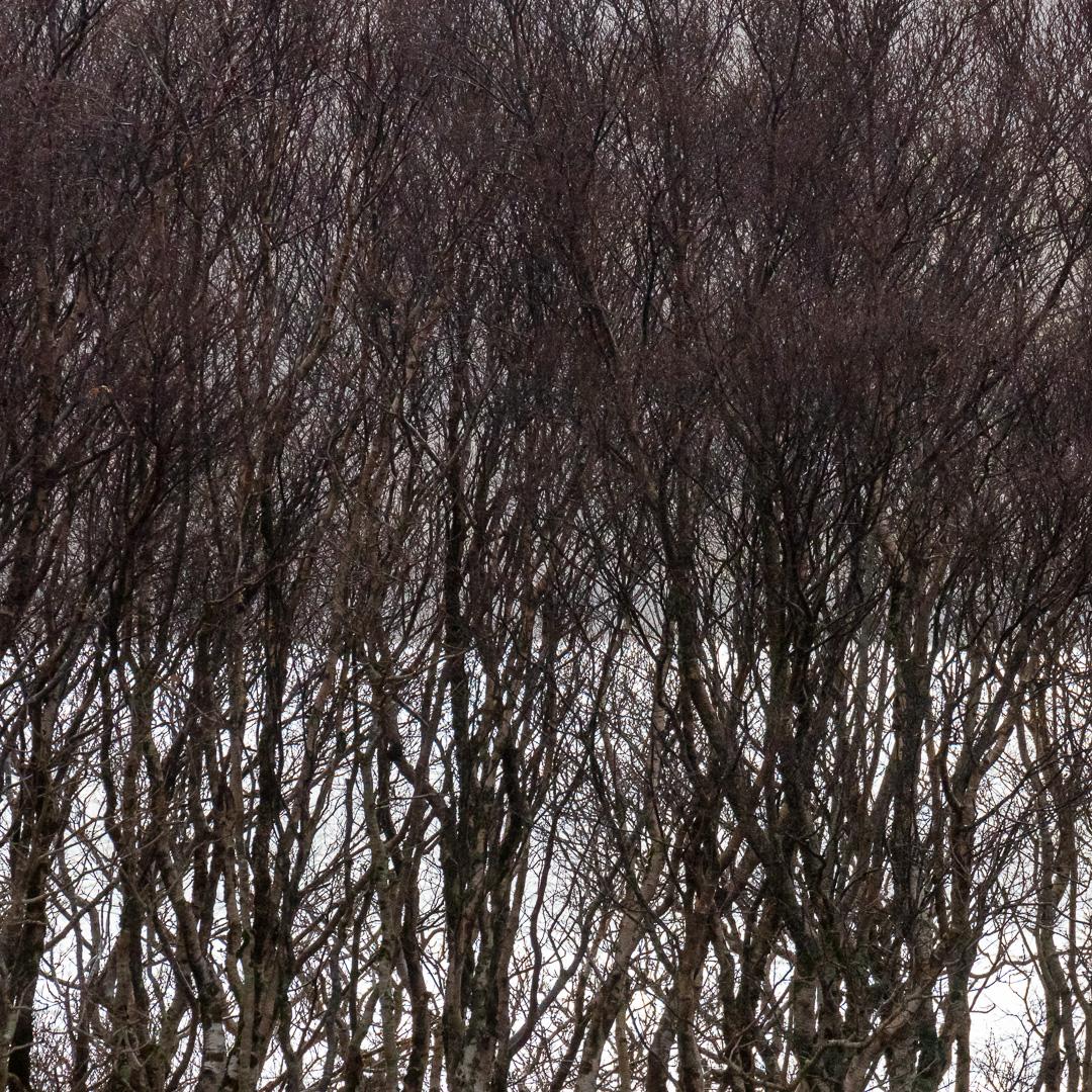 Loch nan Ceall through the trees, Arisaig, Lochaber, Scotland.