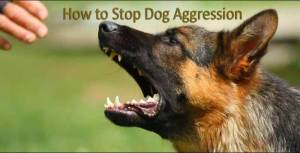 How to Stop Dog Aggressive Behavior