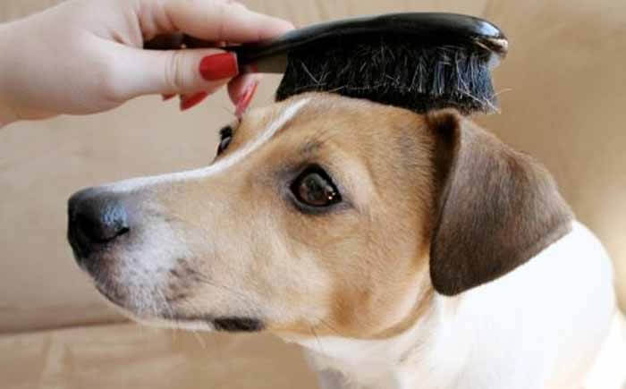 Top Dog Care Tips