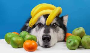 What Fruits Can Dog Eat